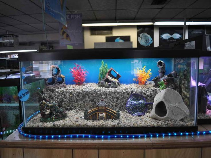 25 best ideas about cool fish on pinterest pretty fish - Awesome fish tank decorations ...
