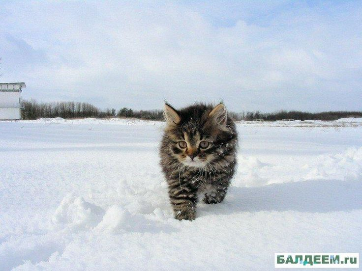 snow-cat60.jpeg http://nekomemo22.blog99.fc2.com/blog-entry-7343.html?utm_source=twitterfeed&utm_medium=twitter