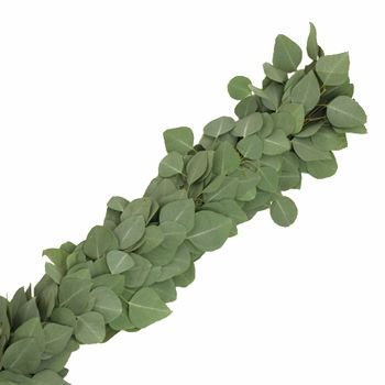 Silver Dollar Eucalyptus Garlands are a great way to decorate for a holiday party or office event. They work best placed on mantles, alters and banisters. Alternatively, they can be used as table centerpieces for backyard weddings! Use them alone or add other fresh flowers. Garlands are...