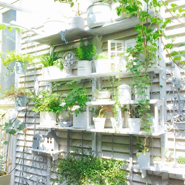ccmanさんの、壁/天井,観葉植物,雑貨,ハンドメイド,DIY,ディスプレイ,多肉植物,ホワイト,gardening,グレー,plant,プチ庭,植物のある暮らし,ホワイト&グレー,garden room,のお部屋写真