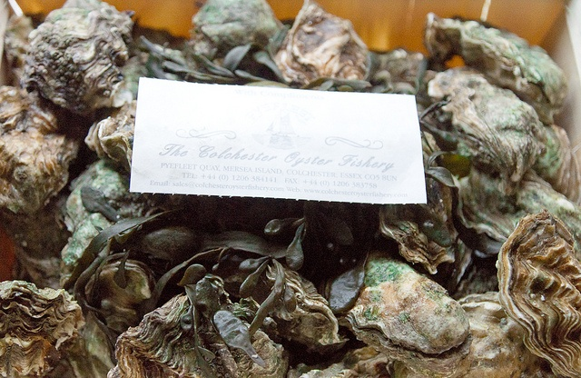 Stunning Colchester rock oysters for tonights menu..