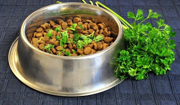 Parsley on dog food for fresher breath » 38 Brilliant Hacks for Dog Owners
