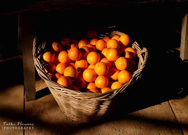Exploring the beautiful @babylonstoren #fruit #oranges #shadow #farm #organic #adventures #explore 🍃🌾🍋🍊🍑  Cathé Pienaar Photography. Cape Town, South Africa, but travel all over.   Contact for information on bookings and package.  - http://cathe.co.za/  - info@cathe.co.za  - https://www.facebook.com/CathePienaarPhotography