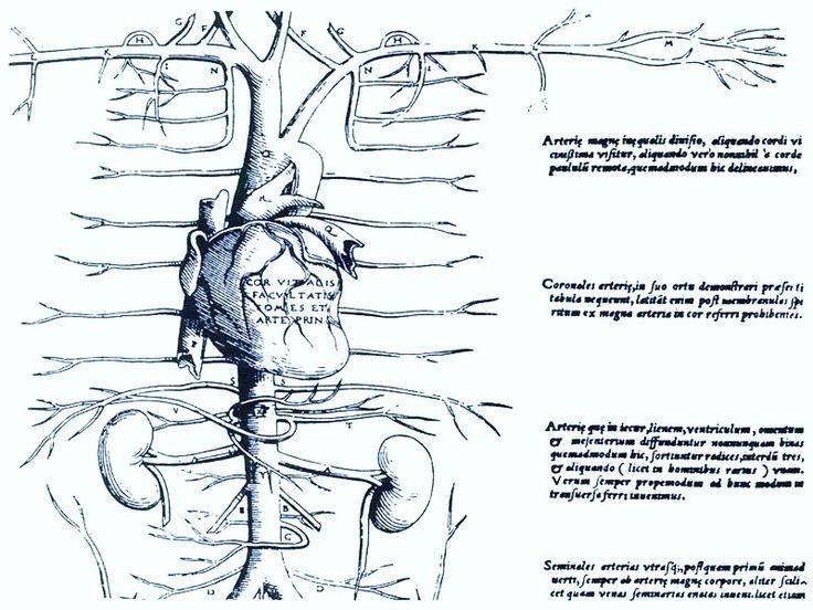 Miguel Servet y la circulación pulmonar. Miguel Servet (1511-1553 https://pinterest.com/pin/287386019946934809/) retuvo la opinión galénica del origen de la sangre en el hígado, por eso no logró comprender la circulación de la sangre por todo el cuerpo. Pero hizo correcciones a Galeno...