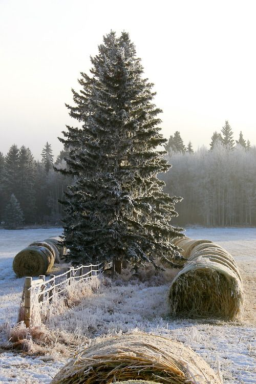 """""""What good is the warmth of summer, without the cold of winter to give it sweetness.""""   ― John Steinbeck,"""