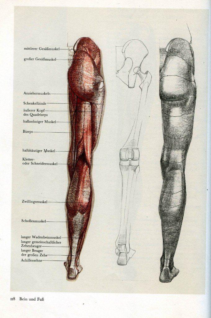 17 besten Human Anatomy Bilder auf Pinterest | Menschliche anatomie ...