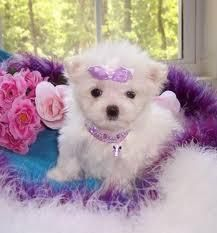 pet unicorns for sale that are real | ... Classifieds: Free Classifieds for Boats, Real Estate, Cars, Pets