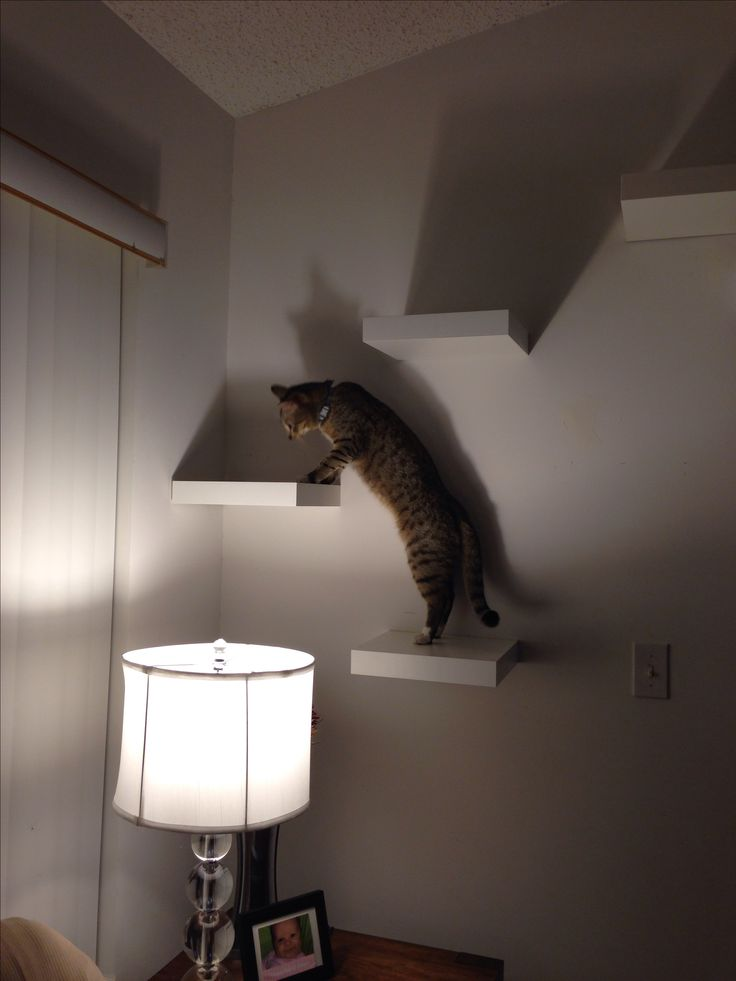 Cat super highway with IKEA Lack Shelf #superhighway #catification