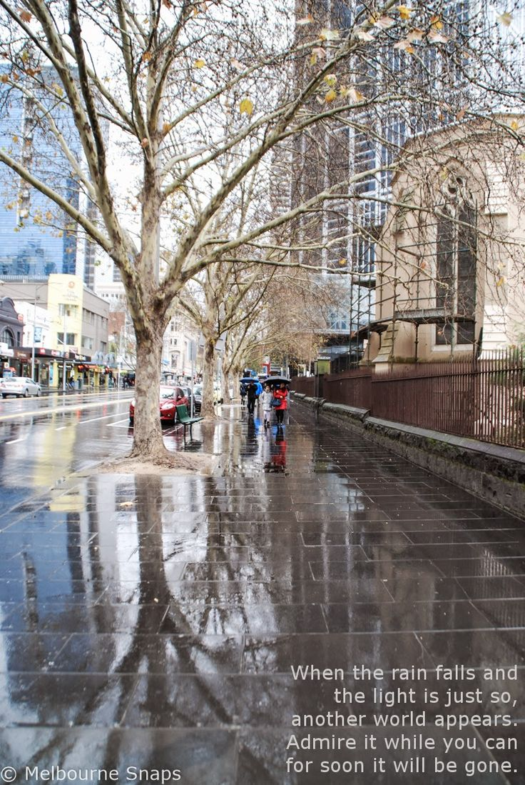 Rain reveals a hidden world in the pavement in Elizabeth Street Melbourne.