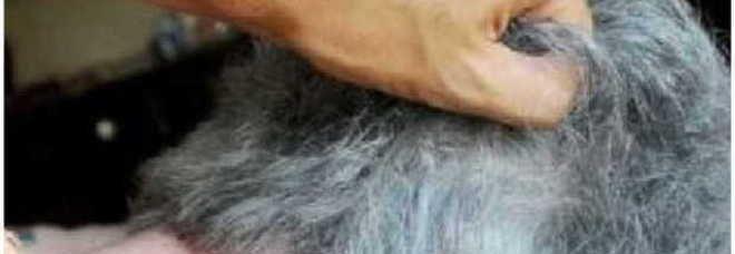 TRIESTE Picchiava, insulta e teneva al freddo i suoi genitori di77 e 75 anni.Il figlio dell'anziano viveva in casa del padre dal