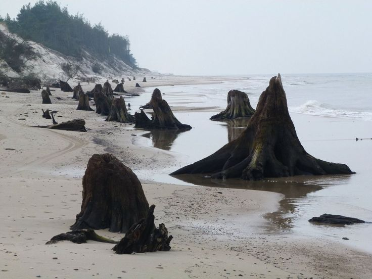 Baltic uncovered the remains of the forest before the few thousand years. It resembles the ruins of the ancient city.