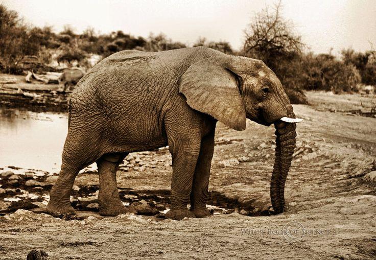 Water for Elephants by WhiteBook.deviantart.com on @DeviantArt