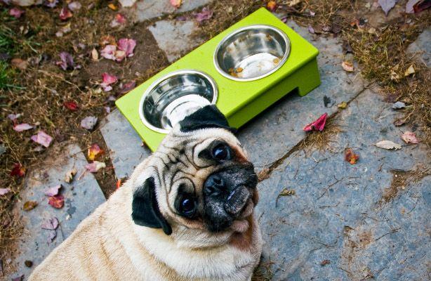 BUY IT: Ultra-Modern Pet Feeder by Loll Designs