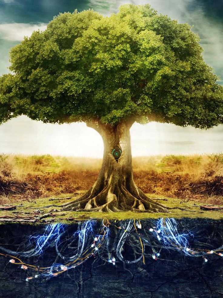 46++ Deep roots wild branches book information