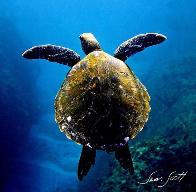 Byron Bay - Sean Scott Photography
