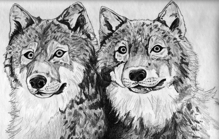Wolf pups by Sarah Wendorf