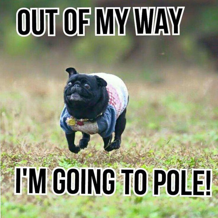 Pole class #polefitnessworld #poledancelife #polelife #poledancerproblems