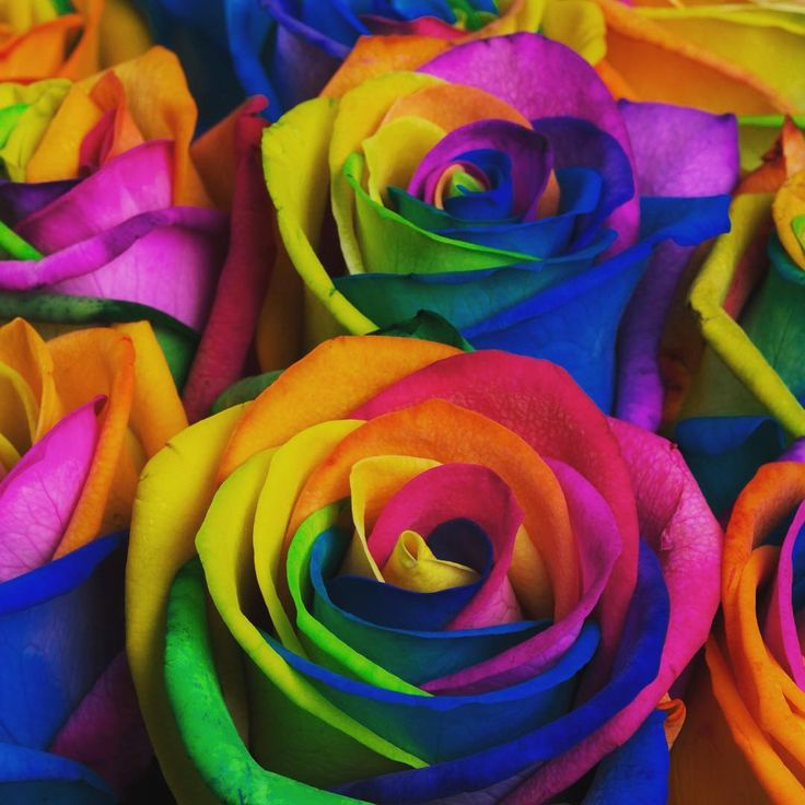 The Orlando bouquet has been designed to remember and honour the victims of the Orlando shooting. All profits from the sale of this hand-tied will go to @planting_peace and their @crowdrise fundraiser 'We Stand with Pulse' to help cover the medical bills and funeral costs of the victims of this senseless and heartbreaking act of violence #westandwithorlando #oneorlando #loveisloveislove. Link to buy in our profile.