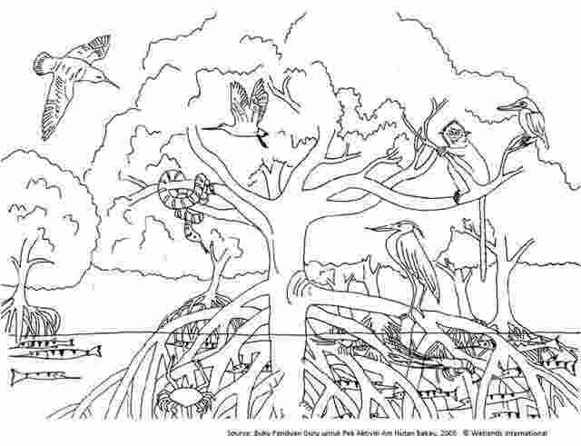 Coloring Book Ecosystem Coloring Pages For Kids More Than 65