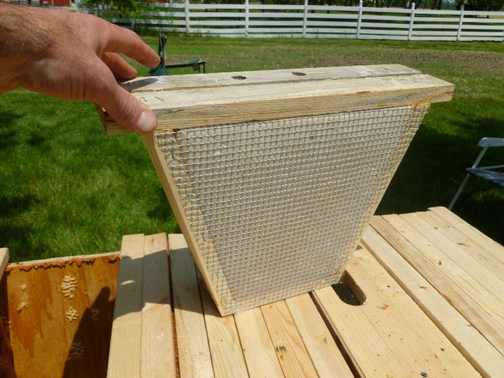 how to find a native bee hive in the bush
