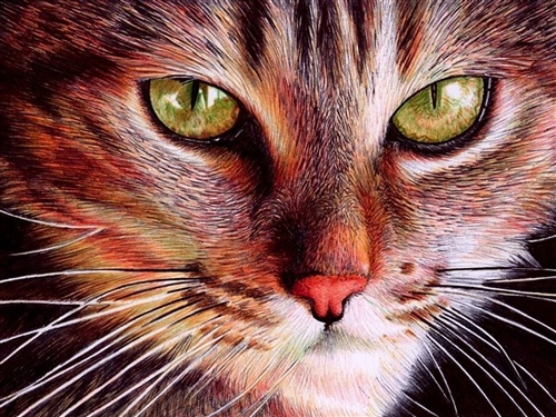 Whereas I couldn't even do this with a camera.: Cat Face, Ballpoint Pens, Pen Art, Photo, Ball Point, Pen Drawings, Samuel Silva