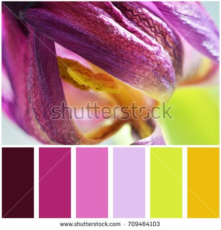 Macro photo of purple tulip flower and palette of colors. Colour swatches.