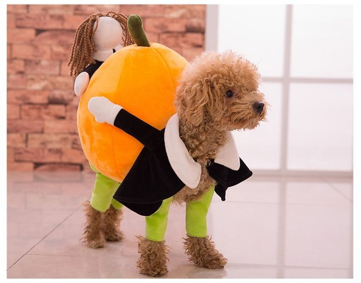 OK, this is the funniest costume I've seen! Your dog and a doll carrying a pumpkin! Its hysterical! Sure to win any costume contest!