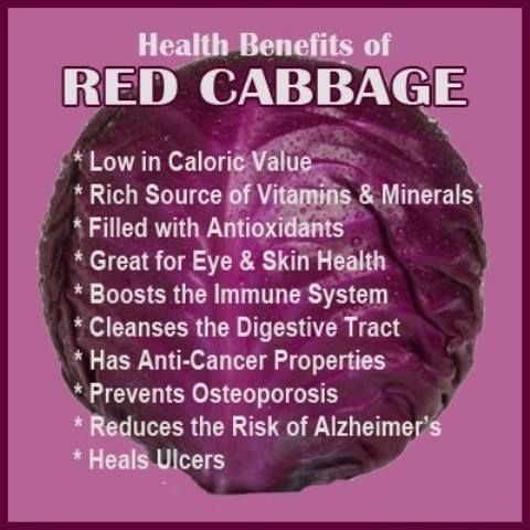 15 Amazing Health Benefits Of Red Cabbages