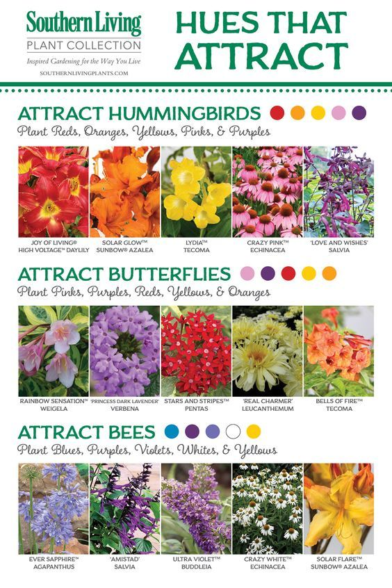 Flood Your Garden With Gorgeous Butterflies | The WHOot