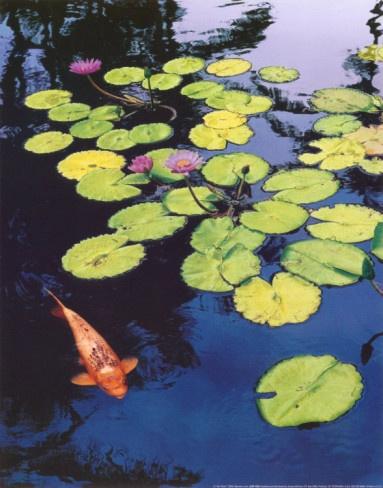 japanese koi garden inspired - photo #37