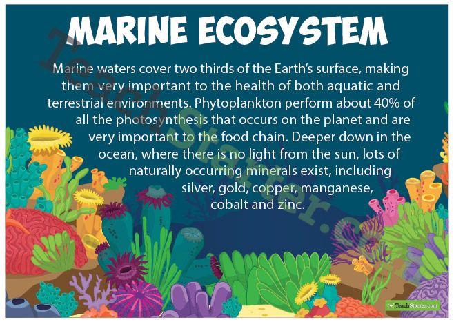 Marine Ecosystem Poster