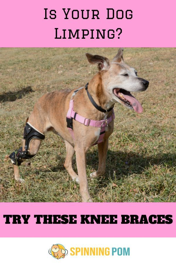 Top 5 Dog Knee Braces for Luxating
