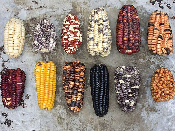 Chef Virgilio Martínez uses Peru's many different types of corn in order to preserve the varieties at his restaurant in Lima.