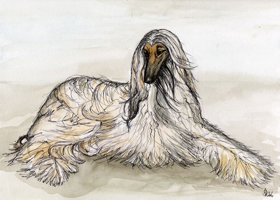 afghan dog art