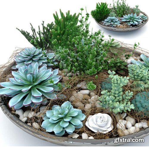Pots with plants succulents