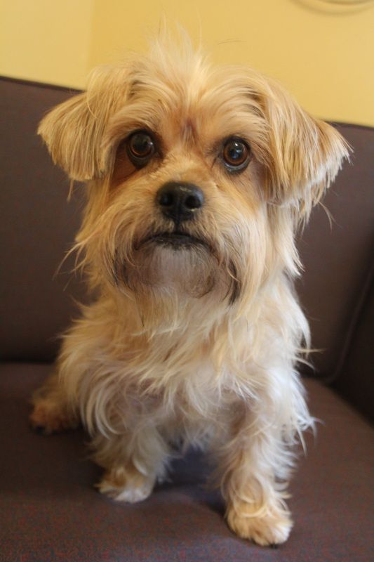Goofy Foot Rescue Dog adoption, Kitten adoption, Small