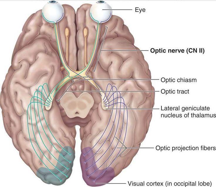 97 best rneyesearsseroat images on pinterest earsseroat images on pinterest eyes health and health care ccuart Images