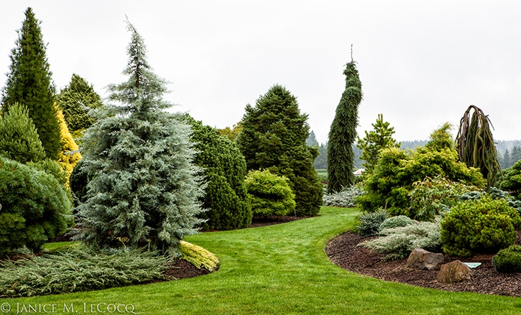 formandfoliagefoto: Iseli Nursery....although in Boring, Oregon...not boring!