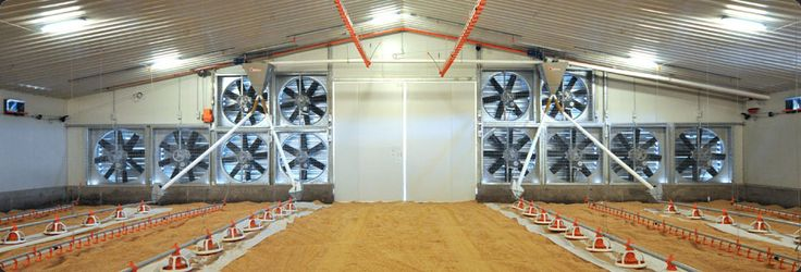commercial poultry house pictures | Building superior chicken sheds, poultry housing and farming sheds for ...