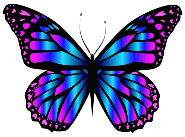 25 Best Ideas About Butterfly Images On Pinterest