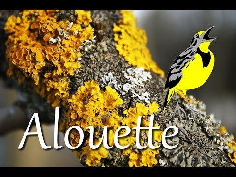 Alouette (instrumental - lyrics video for karaoke)