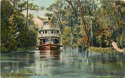 Florida, FL, Up The Ocklawaha River Early Postcard