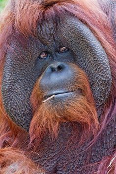 The Mystery of the Orangutan Flange ~ The Ark In Space
