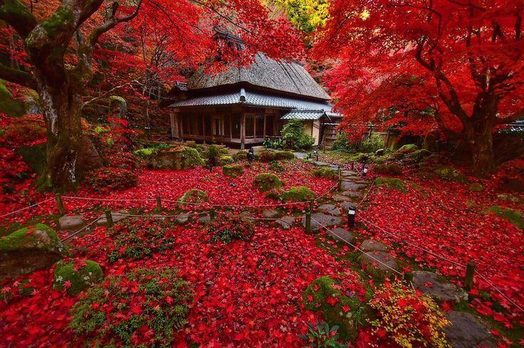 ' ' 滋賀の紅葉🍁 ' 2016.12.1撮影 ' #shiga #滋賀 #紅葉 #秋 #autumn #fall #team_jp_ #gf_japan #igersjp #ig_japan #ig_nippon #wu_japan #loves_nippon #lovers_nippon #japanfocus #icu_japan #wonderful_places #ptk_japan #japan_daytime_view ' #team_jp_西 滋賀 #team_jp_秋色2016 #はなまっぷ紅葉2016 #lovers_nippon_2016秋 ' #k_紅葉2016