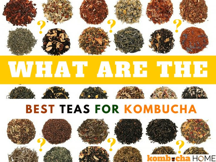 A comprehensive list of the best teas for kombucha and how they effect the flavor (and health) of your kombucha tea