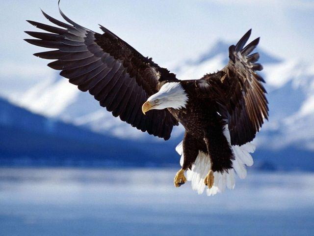 Apprendre à photographier les oiseaux en 3 étapes