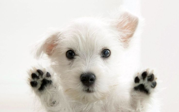look at the lil paws!