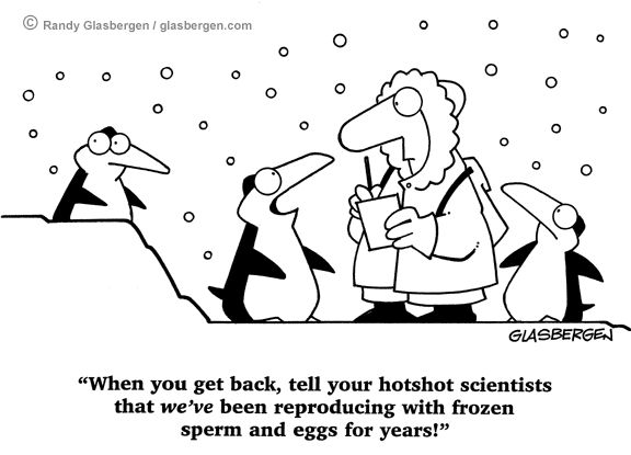 IVF and other funny pregnancy cartoons website