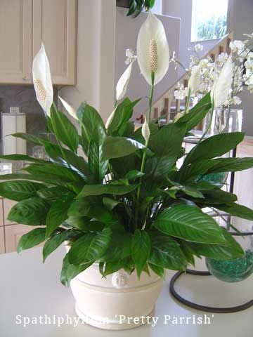 One big plus with houseplants is they can be enjoyed all year