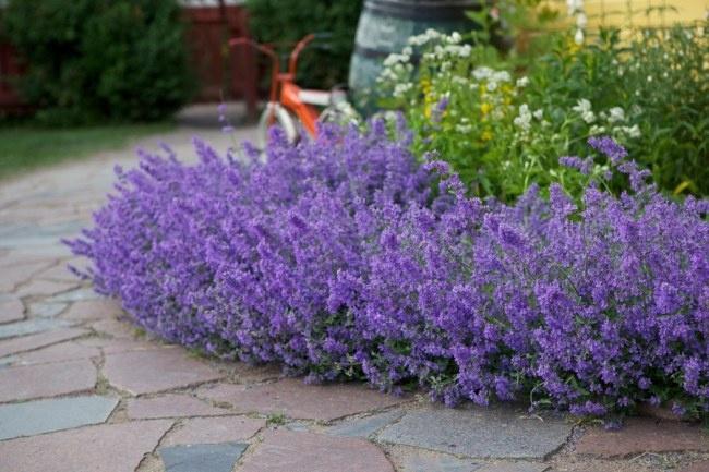 10 tips för planering av trädgård